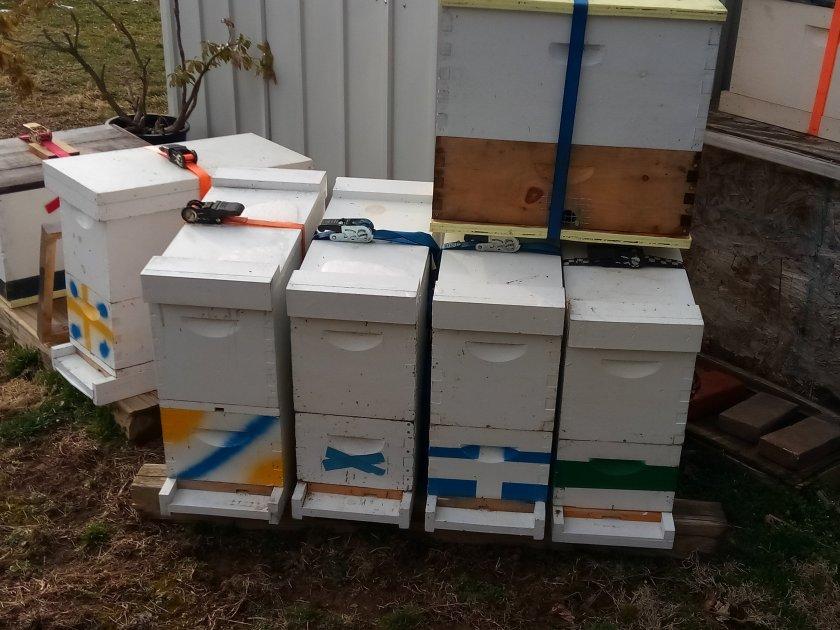 Honey bee swarm trap Reading PA