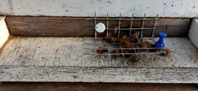 Beekeeper Pennsylvania removal
